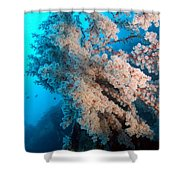 2 Cherry Blossoms  Shower Curtain