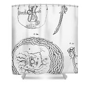 Chick Embryology, Malpighi, 1687 Shower Curtain