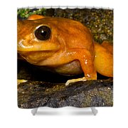 Chilean Tomato Frog Shower Curtain