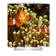 Clown Anemonefish Shower Curtain