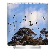 Cockatoos - Canberra - Australia Shower Curtain