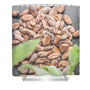 Cocoa Beans Shower Curtain