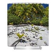 Coconut Palms On A Polynesian Beach Shower Curtain