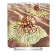 Colon Cancer Cells, Illustration Shower Curtain