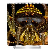 Colorful Harvestman Shower Curtain