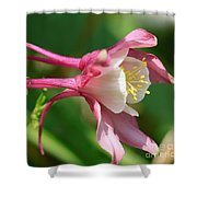 Columbine From The Songbird Series Named Robin Shower Curtain