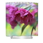 Crabapple Blossom Shower Curtain