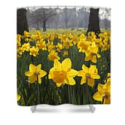 Daffodils In St James Park London Shower Curtain