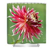 Dahlia Named Akita Shower Curtain