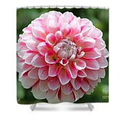 Dahlia Named Hawaii Shower Curtain