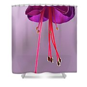 Dance Of The Fuschia Shower Curtain