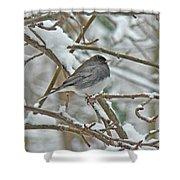 Dark-eyed Junco - Snowbird Shower Curtain
