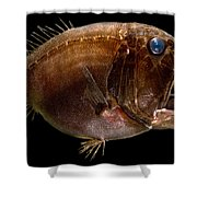 Deep Sea Fangtooth Shower Curtain