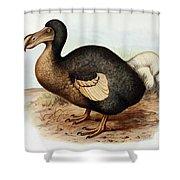 Dodo Bird Raphus Cucullatus, Extinct Shower Curtain