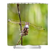 Dragonfly Wings Shower Curtain