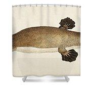 Duck-billed Platypus Ornithorhynchus Shower Curtain