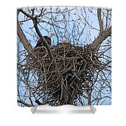 2 Eagles On Nest  3172b  Shower Curtain