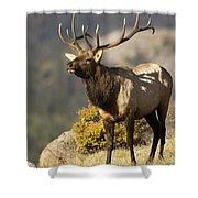 Early Morning Bull Elk Shower Curtain