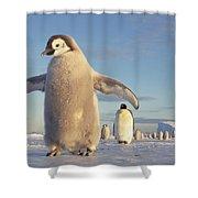Emperor Penguin Aptenodytes Forsteri Shower Curtain by Tui De Roy