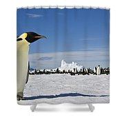 Emperor Penguin Shower Curtain