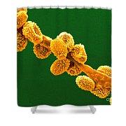 Eurotium Spores Shower Curtain