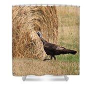 Female Eastern Wild Turkey Shower Curtain