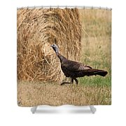 Female Eastern Wild Turkey Shower Curtain
