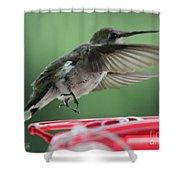 Female Ruby-throated Hummingbird Shower Curtain