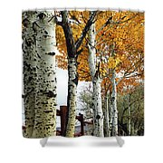 Fenceline Of Fall Aspens Shower Curtain