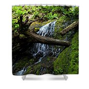 Fern Falls At Jedediah Redwoods State Park Shower Curtain