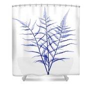 Fern, X-ray Shower Curtain
