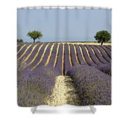 Field Of Lavender. Provence Shower Curtain