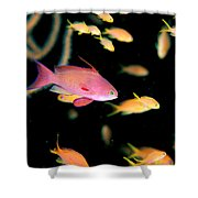 Fiji, Reef Scene Shower Curtain