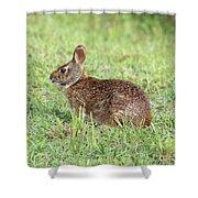 Florida Marsh Rabbit Shower Curtain