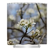 Flowering Trees Shower Curtain