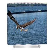 Flying Eagle. Shower Curtain