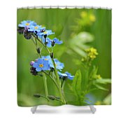Forget-me-not. Shower Curtain