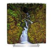 Streaming In The Olympic Rainforest Shower Curtain