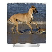 Giant And Tiny Dogs Shower Curtain