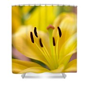 Glorious Lilies Shower Curtain