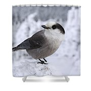 Gray Jay - White Mountains New Hampshire Usa Shower Curtain by Erin Paul Donovan