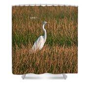 Great Egret At Coba Village Shower Curtain
