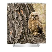 Great Horned Owlet  Shower Curtain