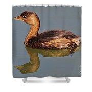 Grebe Shower Curtain