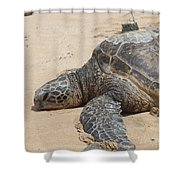 Green Sea Turtle With Gps Shower Curtain