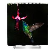 Green Violetear Colibri Thalassinus Shower Curtain