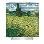 Green Wheat Field With Cypress Shower Curtain