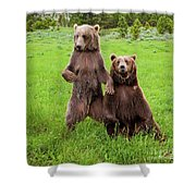 Grizzly Bear Arctos Ursus Shower Curtain