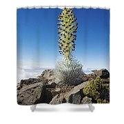 Haleakala Silversword Shower Curtain