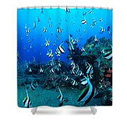 Hawaiian Reef Scene Shower Curtain